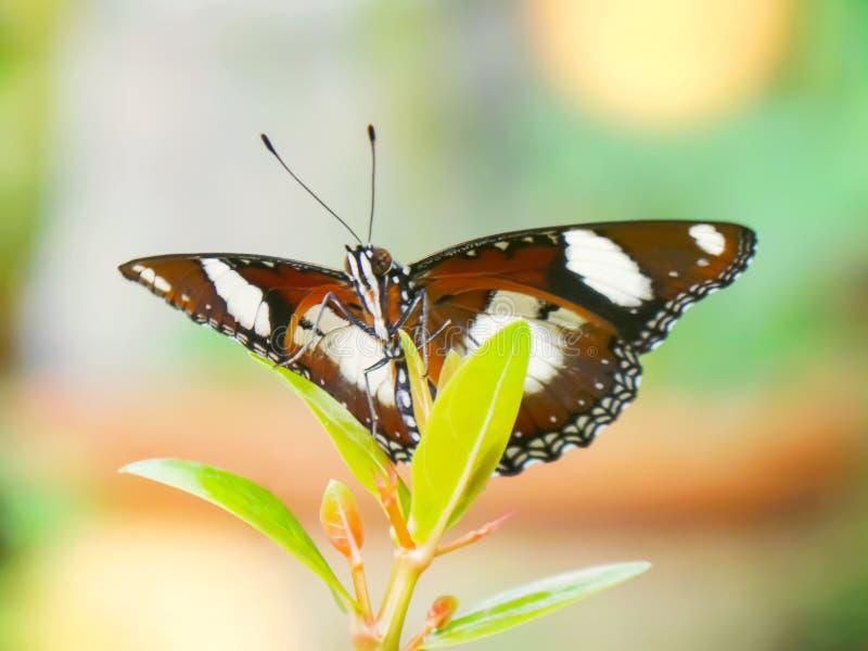 Monarkfjäril i trädgården arkivfoto