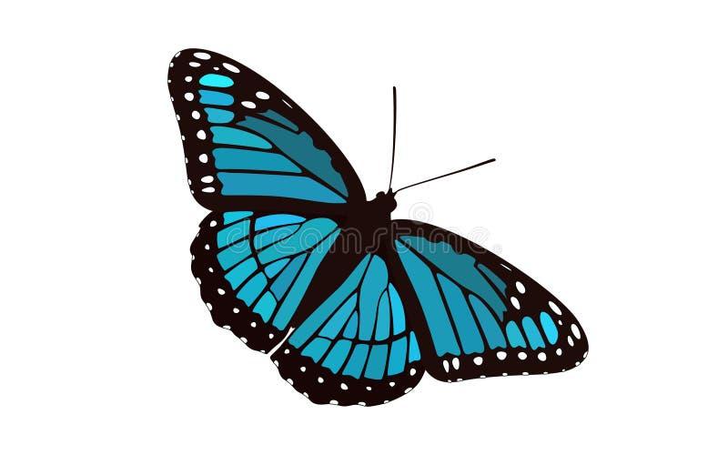 Monarque à ailes par bleu - vecteur de papillon illustration stock