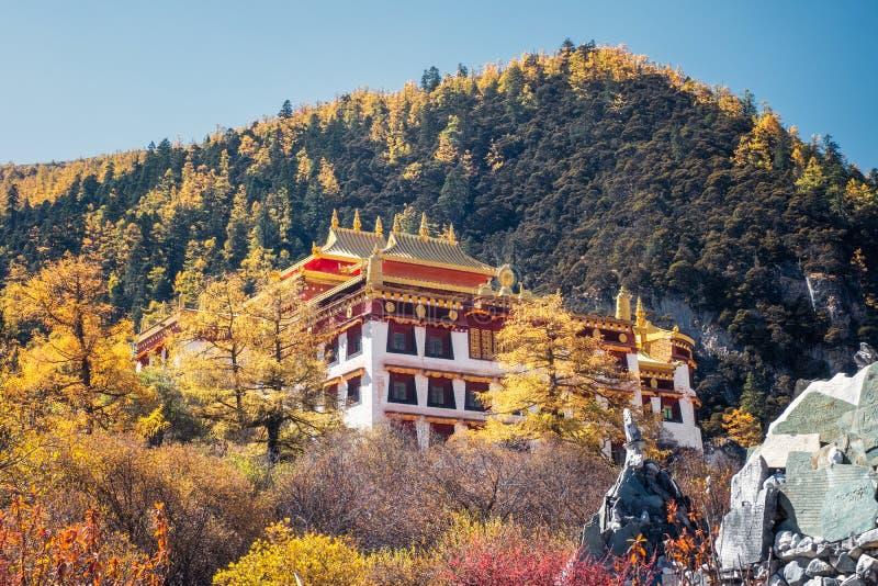 Monastero di Chong Gu che splende nell'abetaia di autunno alla riserva naturale di Yading fotografie stock libere da diritti