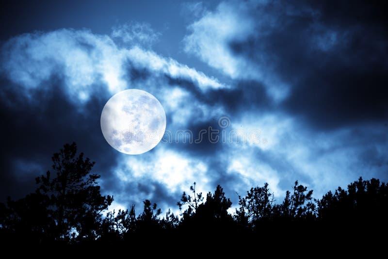 Mond über Bäumen lizenzfreies stockbild