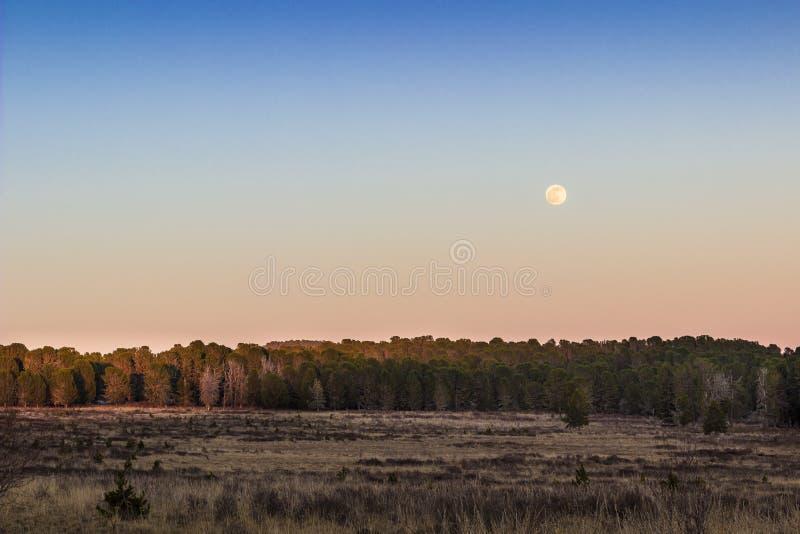Mond lizenzfreies stockbild