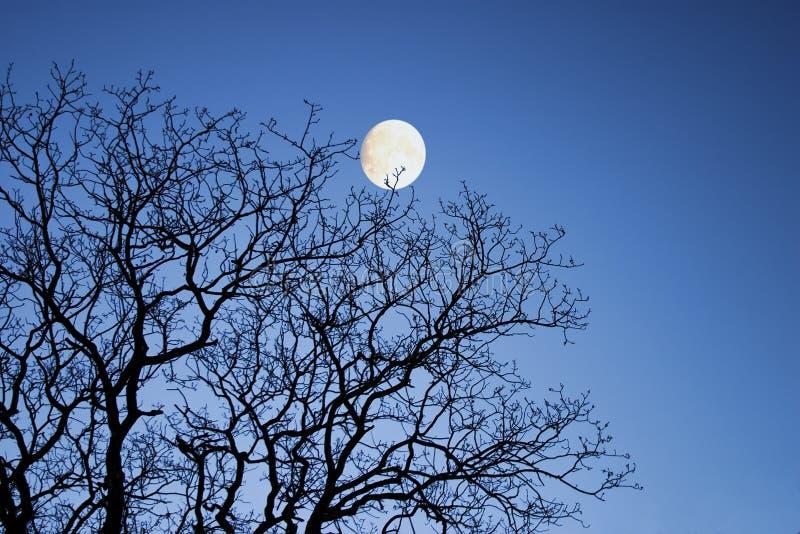 Mond durch Winterzweige stockbild