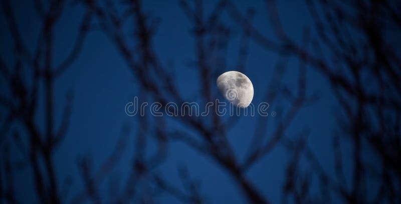 Mond im Himmel stockbild