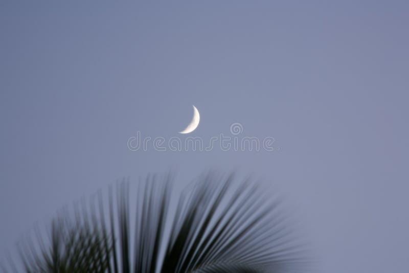 Mond-und Palmen-Wedel stockfotos