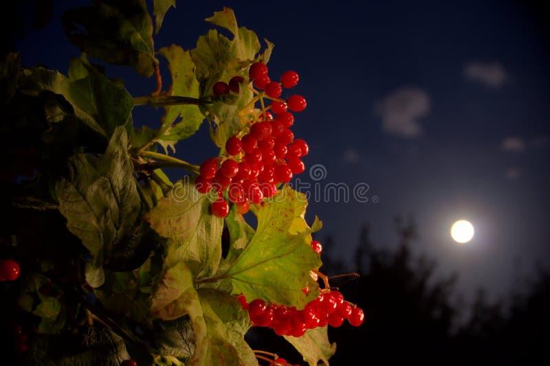 Mondbeeren stockfoto