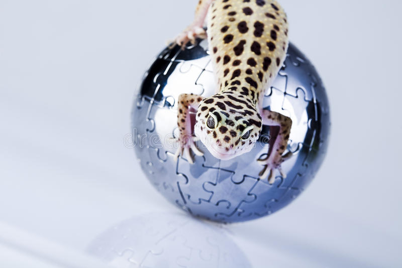 Monde dans le gecko photographie stock libre de droits