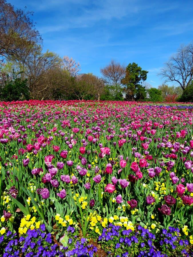Monde des tulipes et des fleurs photographie stock libre de droits