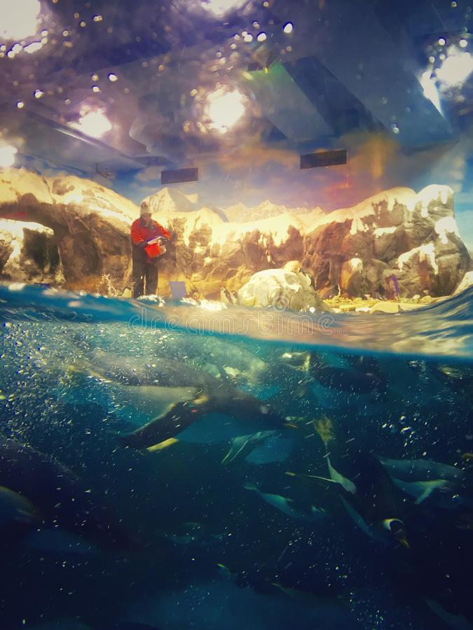 monde en mer image stock