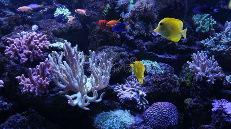 Monde sous-marin coloré images libres de droits