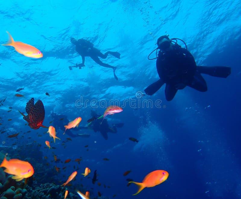 Monde sous-marin dans l'eau profonde dans la flore de fleurs de r?cif coralien et d'usines dans la faune marine du monde bleu, po photo stock