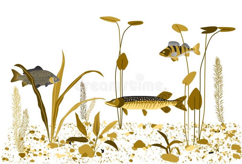Monde sous-marin de rivière, lac Fond de vecteur illustration stock