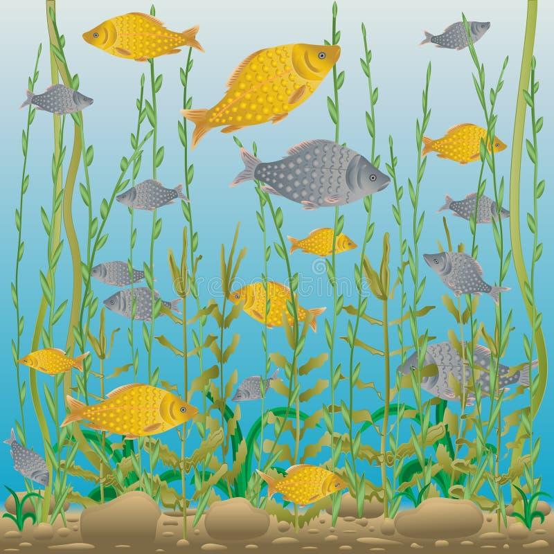 Monde sous-marin de rivière ou de lac illustration libre de droits