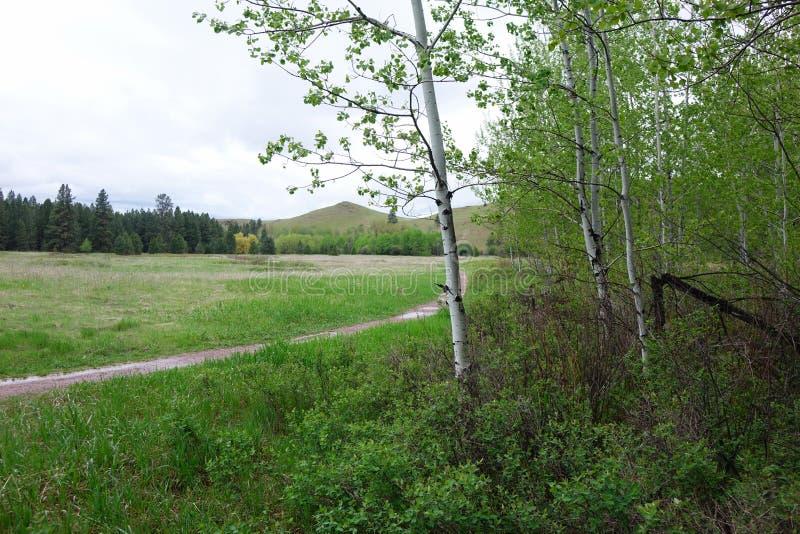 Monde vert - Clay Flat près de Missoula, la TA images libres de droits