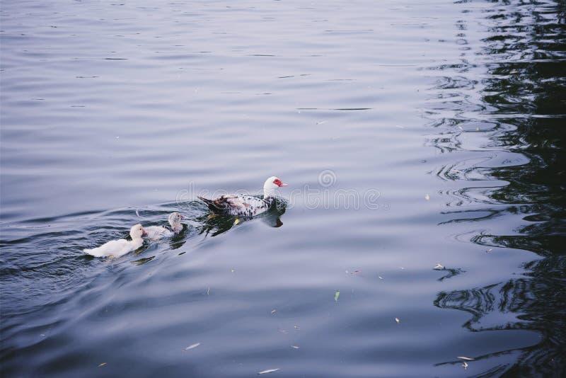 Mondego rzeka obrazy stock