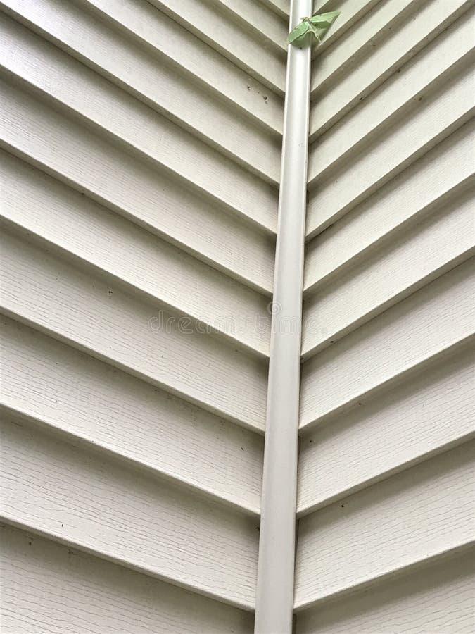 Mondmotte auf Haus-Abstellgleise lizenzfreie stockbilder