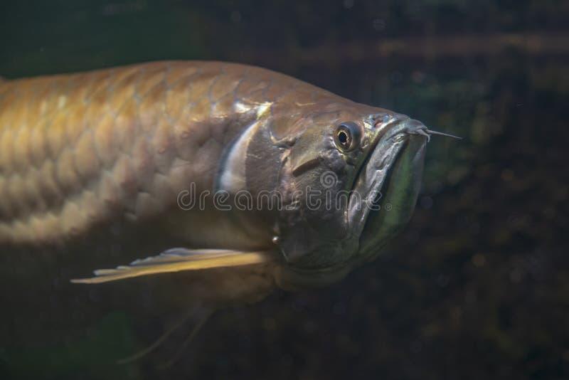 Mondo dell'acqua dello zoo di Praga fotografia stock