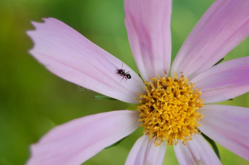Mondo dell'insetto fotografia stock libera da diritti