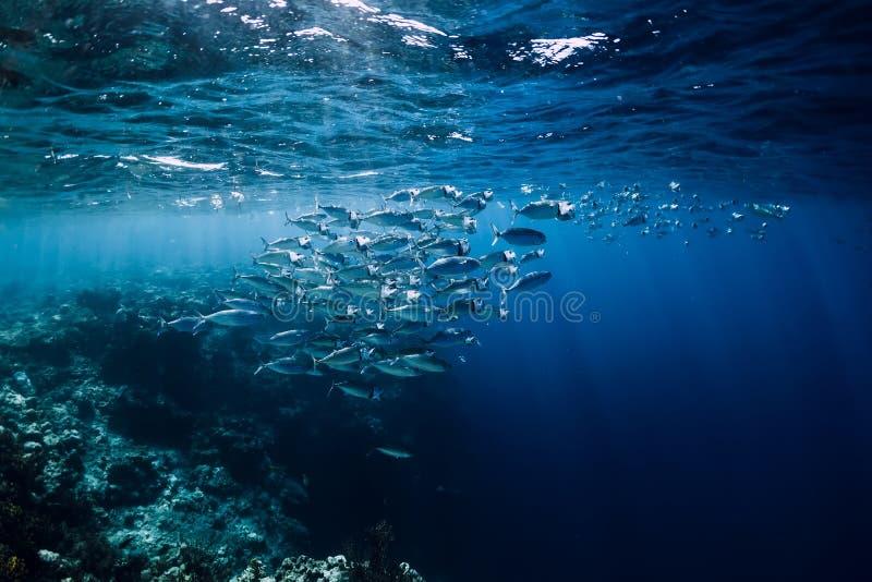 Mondo della fauna selvatica in underwater con il pesce della scuola in oceano alla barriera corallina fotografia stock