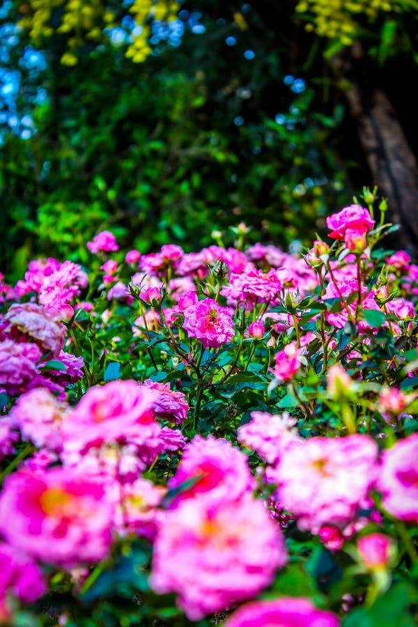 Mondo della flora immagine stock