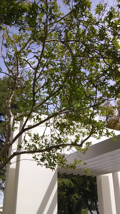 Mondo frondoso di meraviglia dell'albero di gree immagini stock