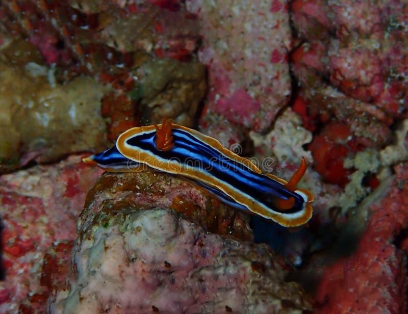 Mondo subacqueo in acqua profonda nella flora dei fiori delle piante e della barriera corallina nella fauna selvatica marina del  immagine stock libera da diritti