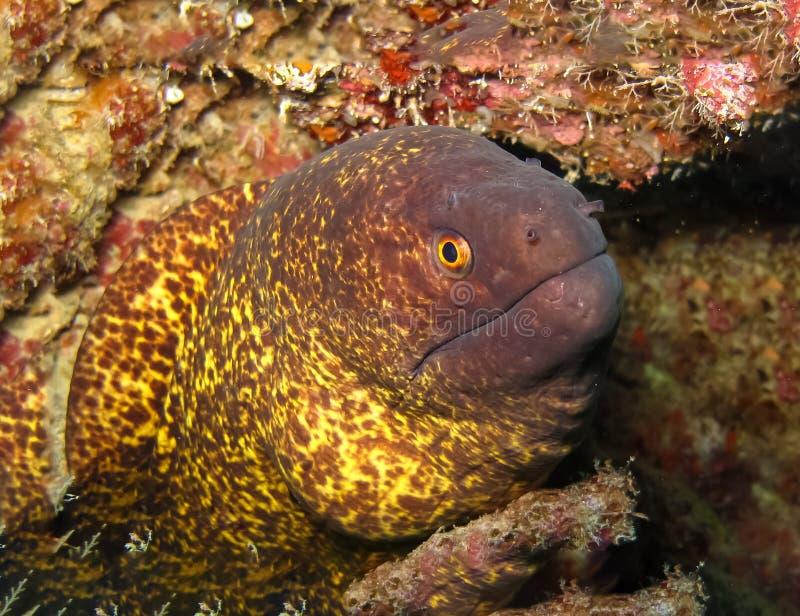 Mondo subacqueo in acqua profonda nella flora della natura delle piante e della barriera corallina nella fauna selvatica marina d fotografia stock libera da diritti