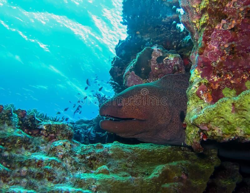 Mondo subacqueo in acqua profonda nella flora della natura delle piante e della barriera corallina nella fauna selvatica marina d immagine stock libera da diritti