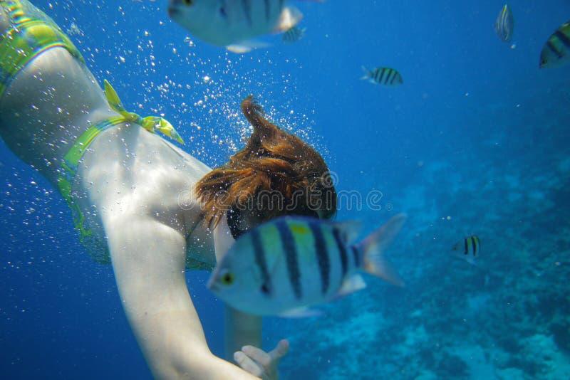 Mondo subacqueo dei pesci fotografie stock libere da diritti