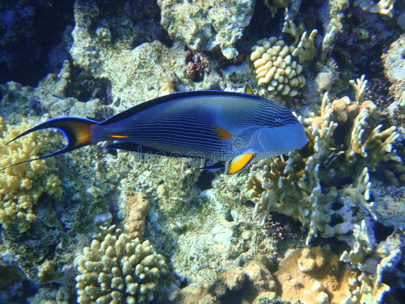 Mondo subacqueo del Mar Rosso fotografie stock