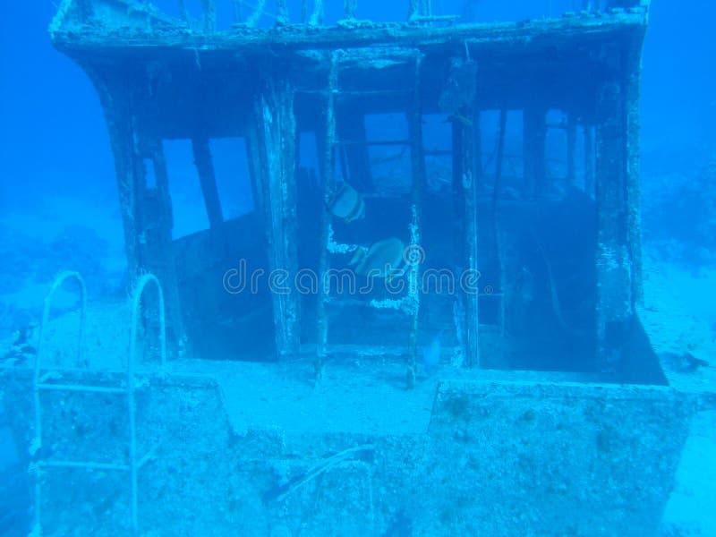 Mondo subacqueo del Mar Rosso immagini stock