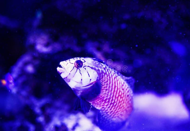 Mondo subacqueo meraviglioso e bello con i coralli ed il pesce tropicale immagine stock libera da diritti