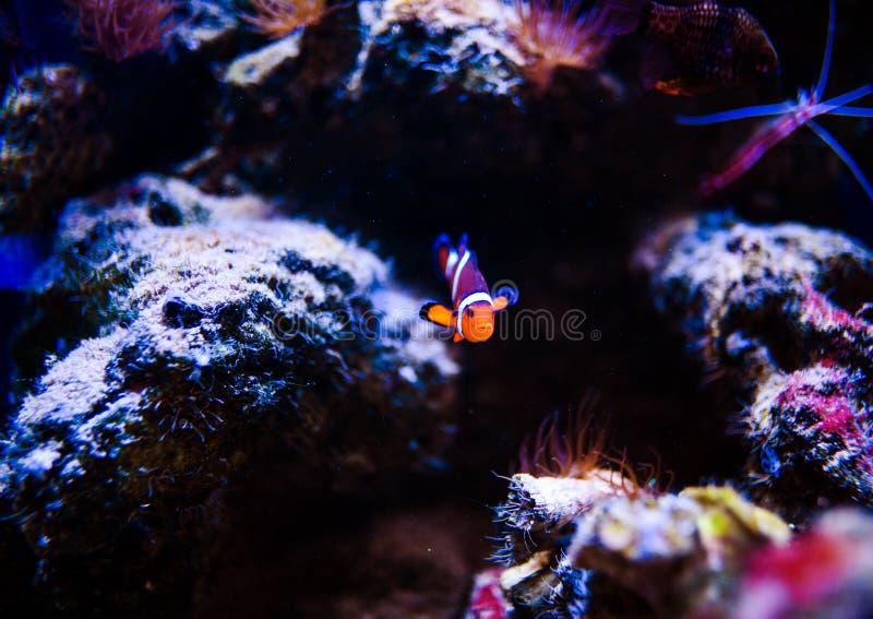 Mondo subacqueo meraviglioso e bello con i coralli ed il pesce tropicale fotografia stock libera da diritti