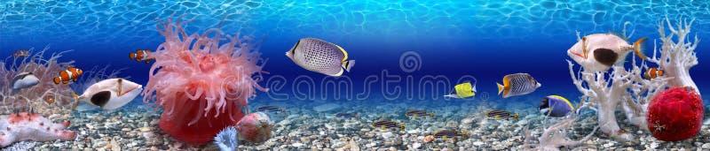 Mondo subacqueo - panorama