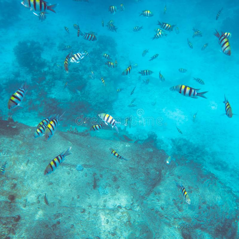 Mondo subacqueo tropicale immagini stock libere da diritti