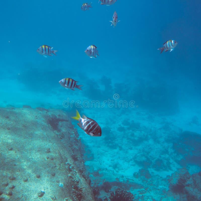 Mondo subacqueo tropicale immagini stock