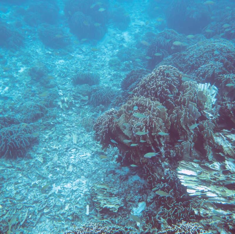 Mondo subacqueo tropicale fotografia stock