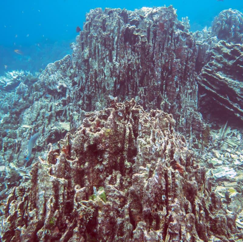 Mondo subacqueo tropicale fotografia stock libera da diritti