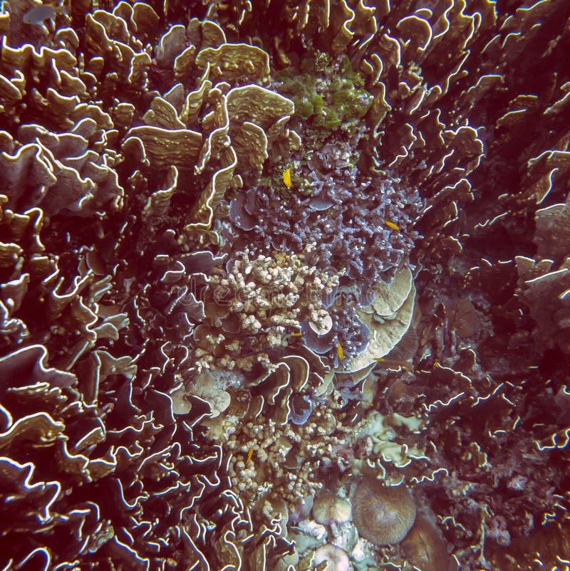 Mondo subacqueo tropicale fotografie stock