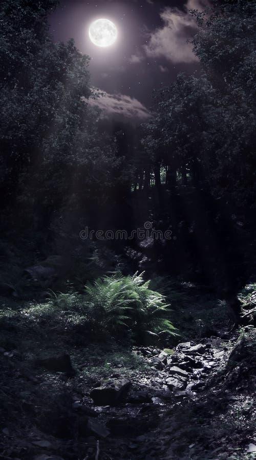 Mondschein im Wald stockfotografie