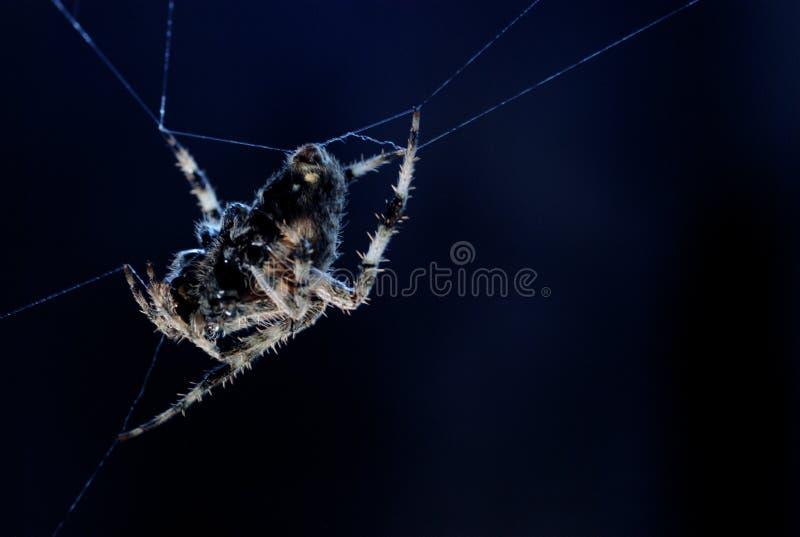 Mondschein-Spinne von der Seite lizenzfreie stockfotos