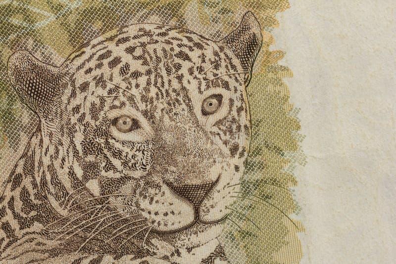 Moneda brasileña: Real Detalle del bil de 50 Reais de Jaguar imagen de archivo libre de regalías