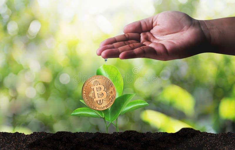 Moneda Crypto de Bitcoins de la escalera del concepto de oro financiero del crecimiento imagen de archivo
