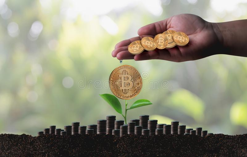 Moneda Crypto de Bitcoins de la escalera del concepto de oro financiero del crecimiento fotografía de archivo libre de regalías