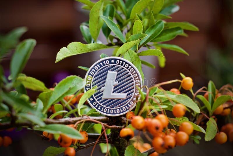 Moneda de Litecoin en el árbol imágenes de archivo libres de regalías
