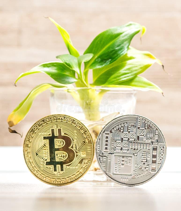 Moneda del bitcoin del oro y de la plata colocada debajo de pequeño árbol de plátano en vidrio Símbolo de cryptocurrencies imagen de archivo libre de regalías
