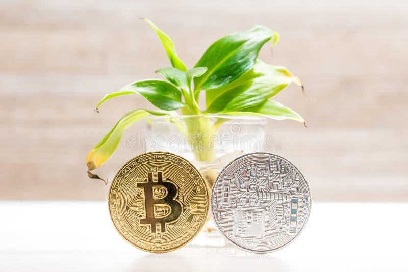 Moneda del bitcoin del oro y de la plata colocada debajo de pequeño árbol de plátano en vidrio Símbolo de cryptocurrencies foto de archivo