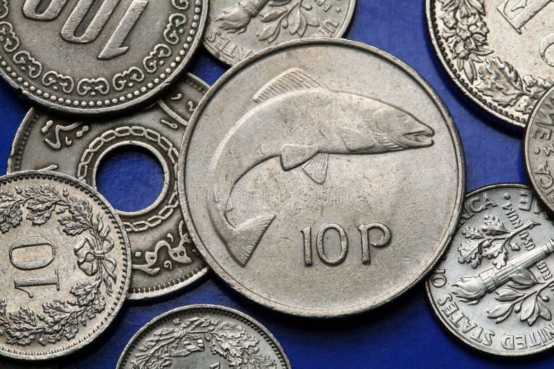 Monedas de Irlanda fotos de archivo libres de regalías