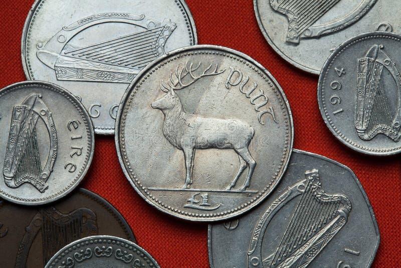 Monedas de Irlanda Ciervos comunes y x28; Elaphus& x29 del Cervus; imagen de archivo