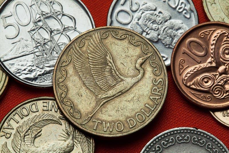 Monedas de Nueva Zelanda Gran garceta del este (modesta alba del Ardea) fotos de archivo