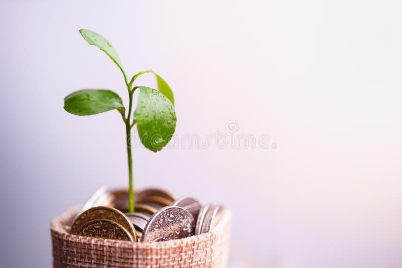 Monedas en el saco y la planta que brillan intensamente en monedas de los ahorros imagenes de archivo